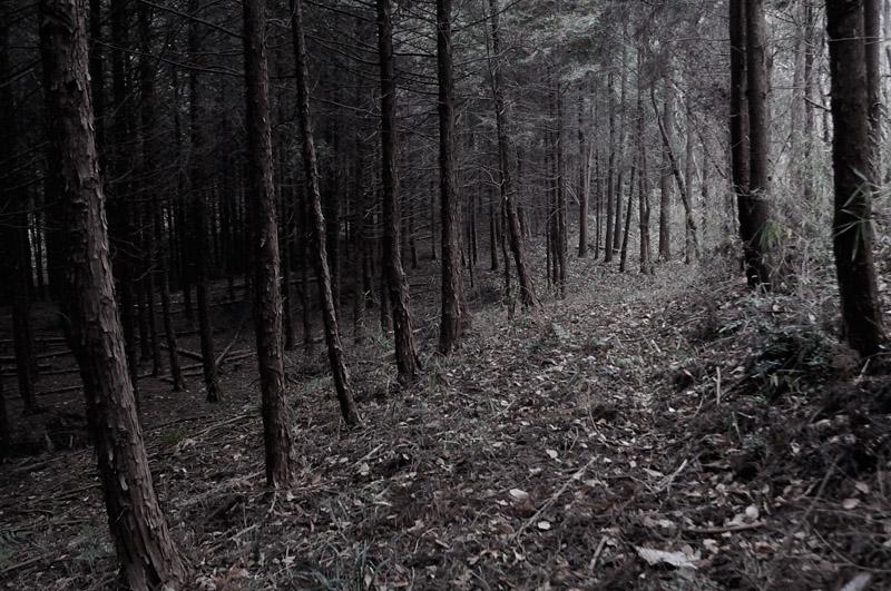 都賀某所の森の中