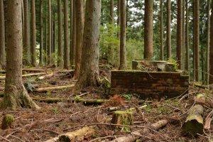 森の中に残留物発見