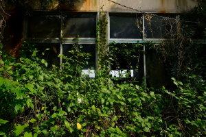 緑に閉ざされる窓