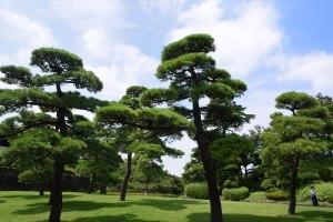 美しい敷地内の緑地