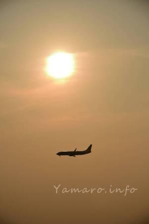 JAL B737-800(JA333J)