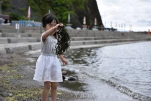 なんかの海藻