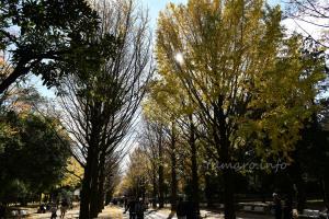 秋の光が丘公園