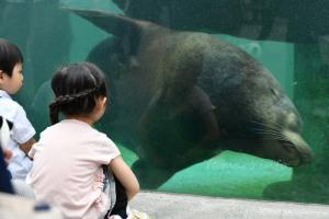 動物園だけどアシカも見られる