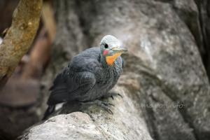 名前わからない鳥2