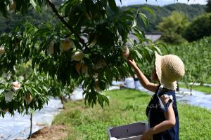 富田農園で桃狩り
