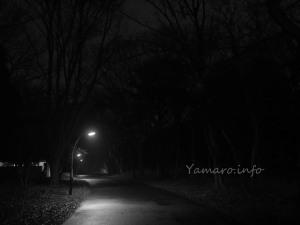 公園夜スナップ