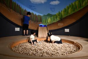 木のボールの遊び場