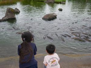 鯉に餌やり