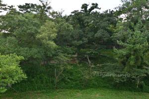 弾薬庫跡と砲台跡は草木に埋もれていた