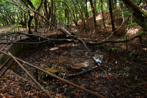 砲台跡の池